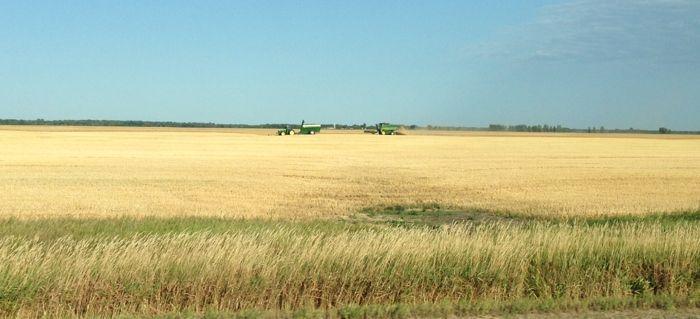 Harvest is already happening