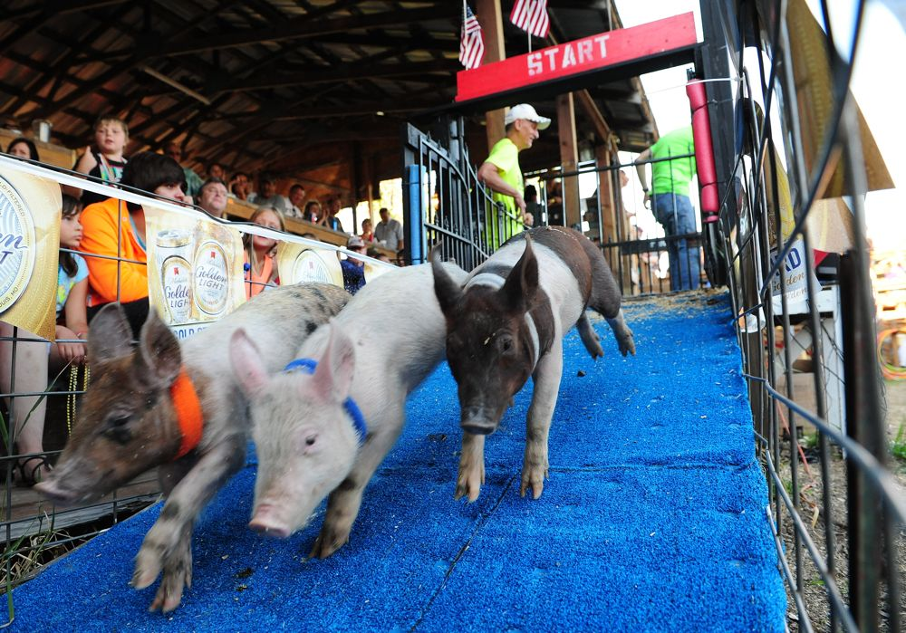 Pig races in Leader Minn. Part of the Arctic Cat adventure. Photo by ArcticInsider and Pat Bourgeois.