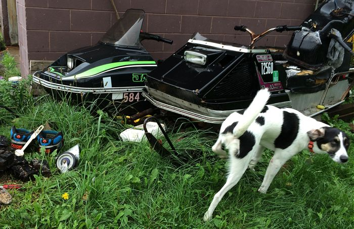 Otis the dog washes off an Arctic Cat Panther and Jag. Photo ArcticInsider.com