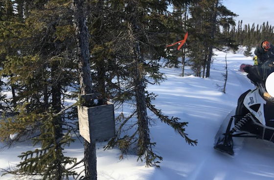 A ribbon marks the location of a pine marten trap along the trail to Churchill, Man. (Photo courtesy of Rob Hallstrom)