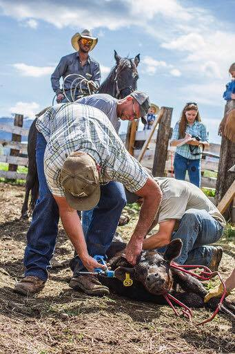 """Few knew Rob as a Cattle Rancher. A """"hobby"""" he took up in recent years."""